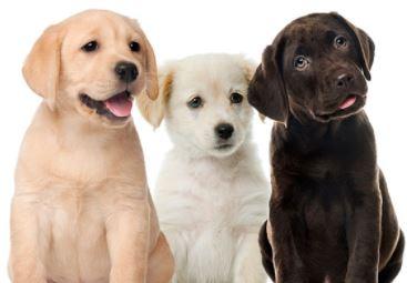 lista de nombres frikis para perros