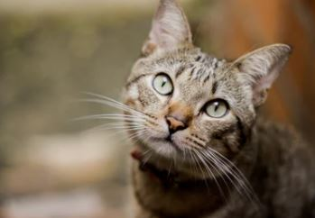 nombres frikis para gatos, nombres originales para gato