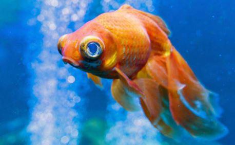 nombres frikis para mascotas, nombres frikis para peces