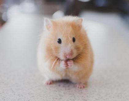 nombres frikis para mascotas, nombres frikis para hamster, nombres originales para mascotas