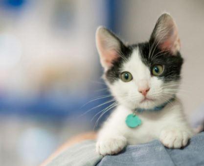 nombres frikis para mascotas, nombres frikis para gatos