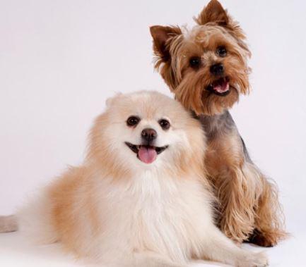 nombres frikis para perros, nombre friki para tu mascota