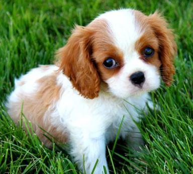 lista de nombres divertidos para perros