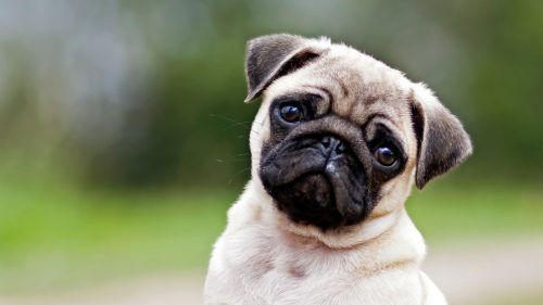 los nombres mas originales para perros
