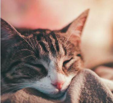 nombres frikis para gatos y gatas