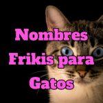 nombres frikis para gatos, nombres para gatos frikis originales