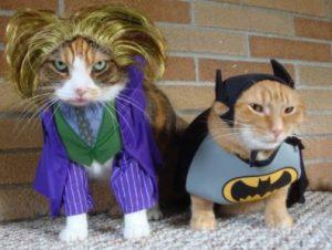 comprar cosas para gatos frikis, productos frikis y originales para tu gato, regalos frikis para gatos, accesorios frikis para gato o gata