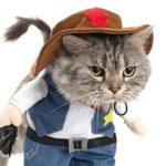 comprar productos frikis y originales para tu gato, los mejores regalos frikis para gatos online