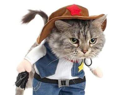 comprar productos frikis y originales para tu gato, los mejores regalos frikis para gatos online, accesorios para gatos frikis, regalos y presentes frikis para gato o gata