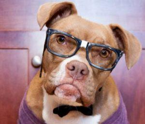 regalos frikis para tu perro o gato, mascotas frikis cosas para tu mascota friki, accesorios mas frikis para tu mascota