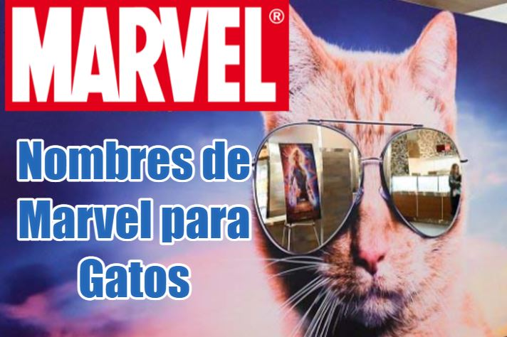 nombres de marvel para gatos, los nombres mas frikis y originales divertidos de gatos de los personajes y superhéroes de marvel, nombres de películas y cómics de marvel para gatos