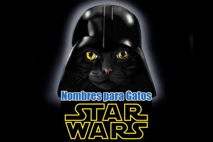 nombres de star wars para gatos, nombres frikis y divertidos de la guerra de las galaxias para gato o gata