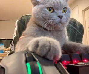 nombres para gatos de videojuegos, nombres de video juegos para gato o gata