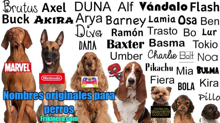 nombres originales para perros, llama a tu perro de una forma original y divertida. Nombres originales para perro macho o hembra, perros grandes fuertes o pequeños