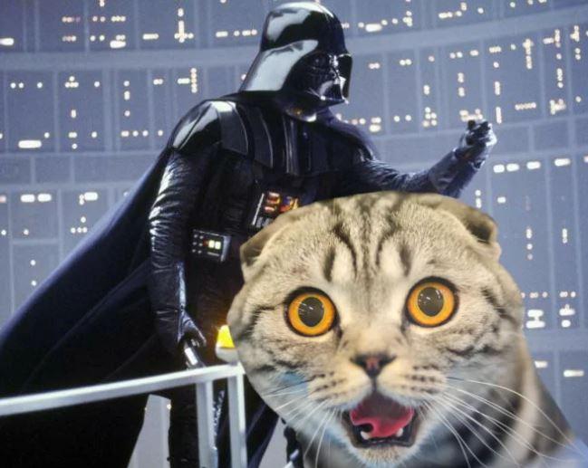 nombres de gato de personajes de las películas de star wars