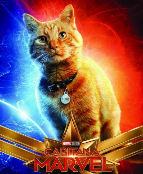 nombres para gatos de películas y cómics de marvel, nombres para gatos machos y hembras gatas de marvel